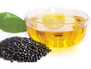 牡丹籽油设备 牡丹籽油榨油精炼生产线